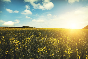 Spring Into Action: Why You Should Move in the Springtime
